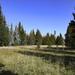 High Desert Meadow