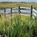 Cattails, Fence, and Pond