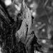 Under The Peanutbutter Tree by joysabin