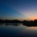 Blue Ray at Baker Wetlands by kareenking