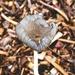 Fungi Detail