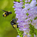 Obedient Bees by kvphoto