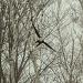 Fly like an eagle! by mandyj92