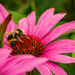 Busy bee by mave