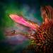 flower by samae