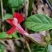 Weed or wildflower  by sugarmuser