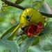 Fig Feast