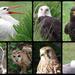 Birds of Prey by 30pics4jackiesdiamond