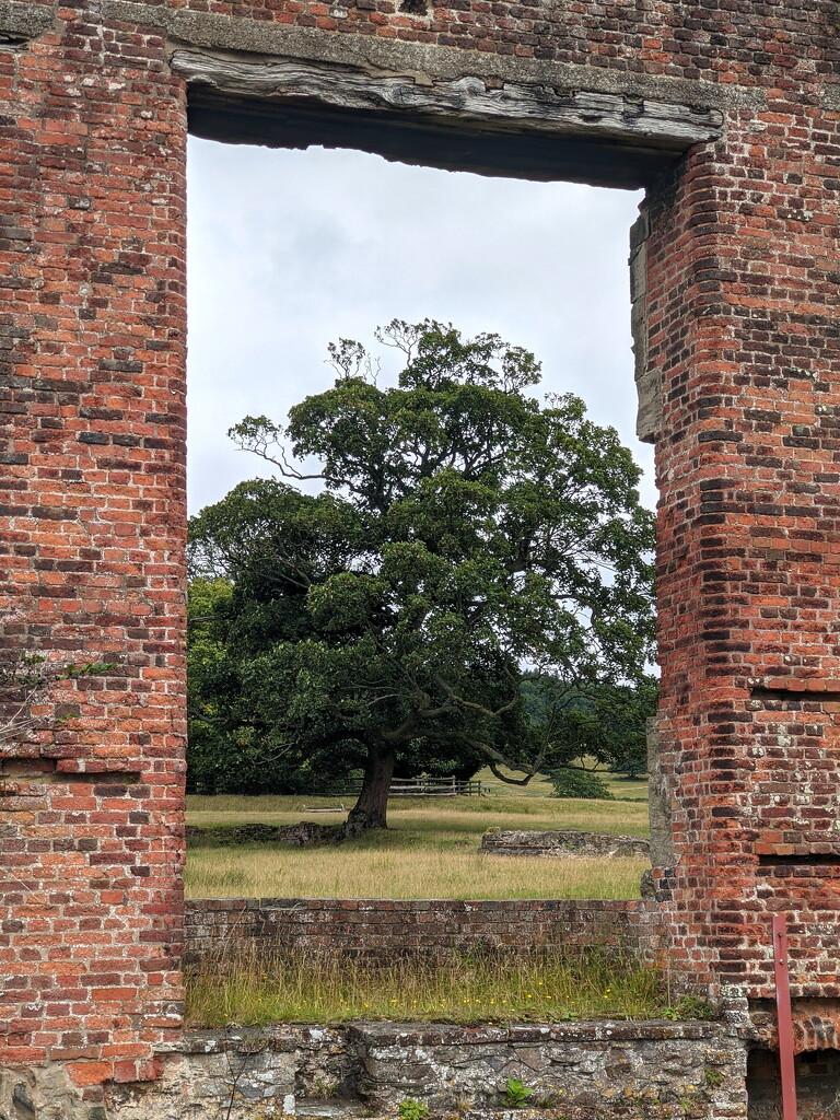 Oak Frame by bulldog