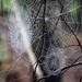 3 webs