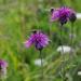Field of Bees by 30pics4jackiesdiamond