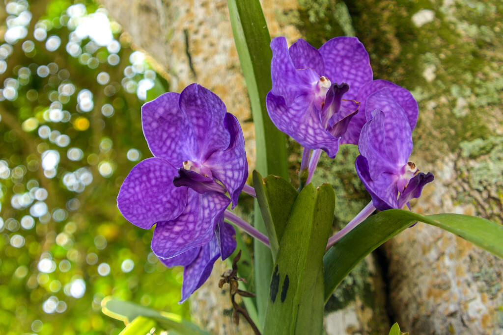 Orchids by danette