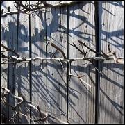 16th Jan 2011 - Shadows