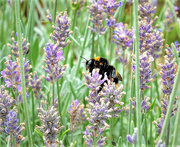 1st Sep 2021 - Busy Bee!
