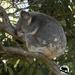 the zen of Bullet by koalagardens