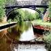 Bridge Beauty. by teresahodgkinson
