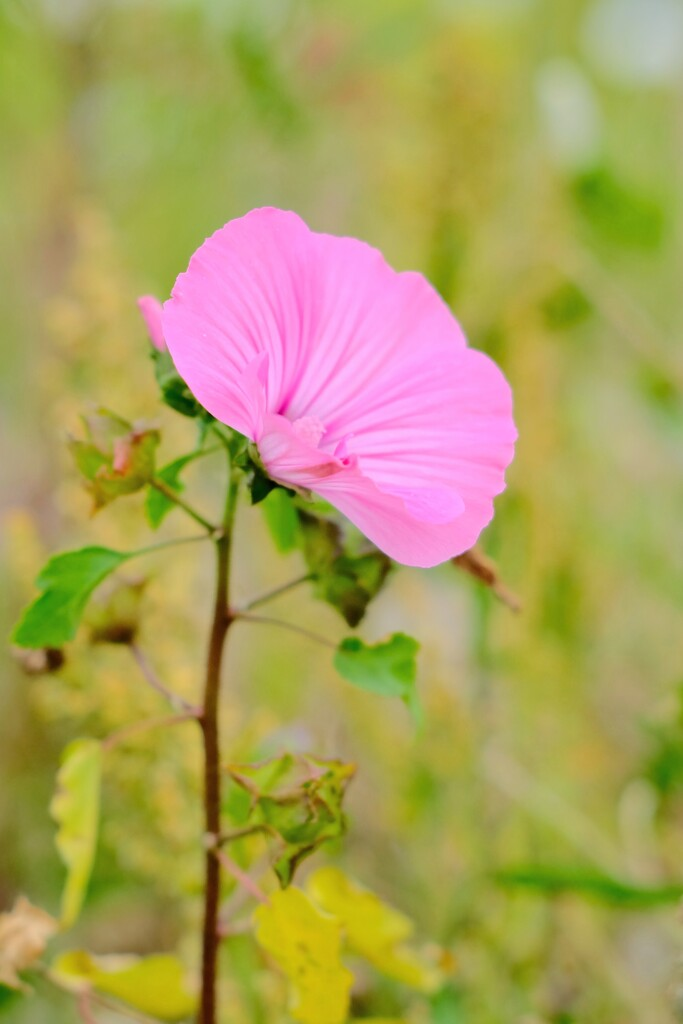 Wildflower by 4rky