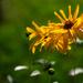 Flower by 0x53