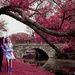 Get Pushed Challenge- false color infrared photography