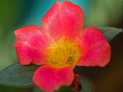 3rd Sep 2021 - Red-flower