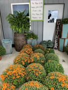 4th Sep 2021 - MUMS FOR SALE