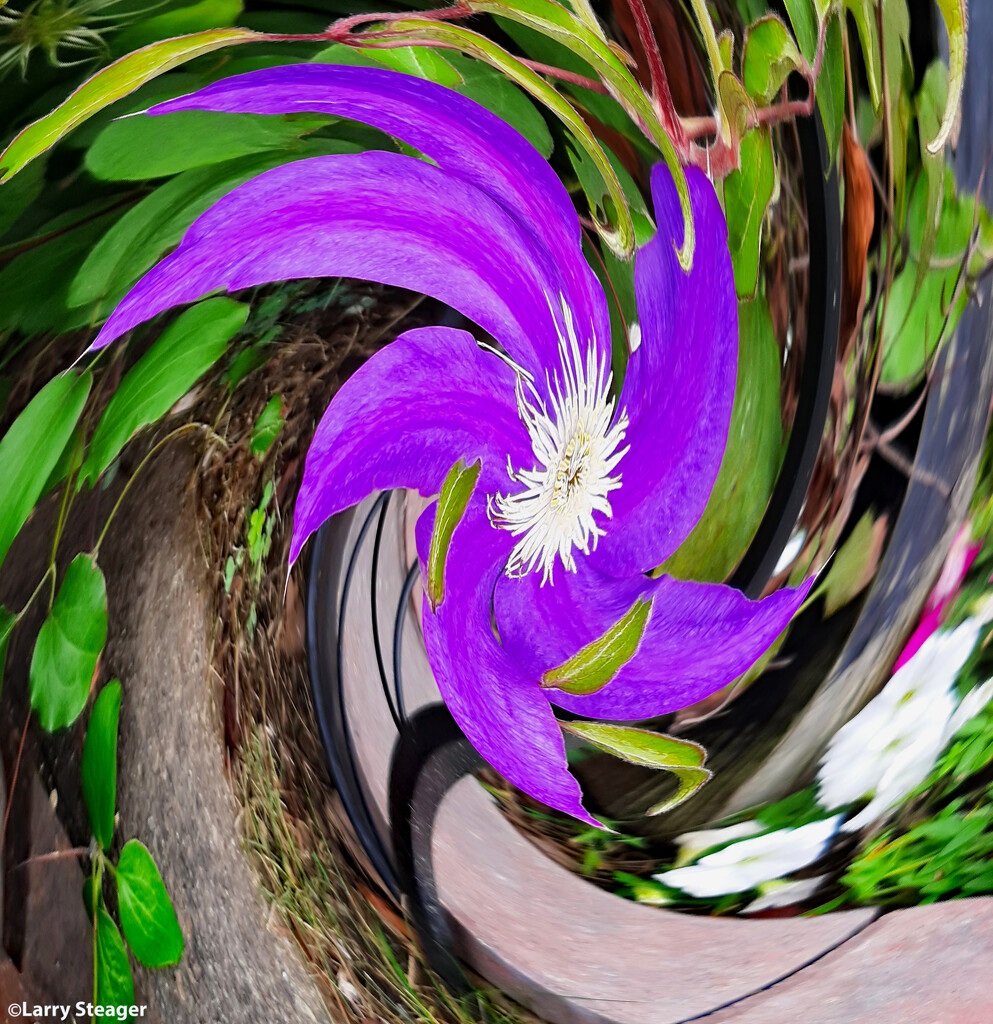 Clematis vine flower abstract by larrysphotos