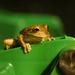 Froggy the garbage patrol. by dutchothotmailcom