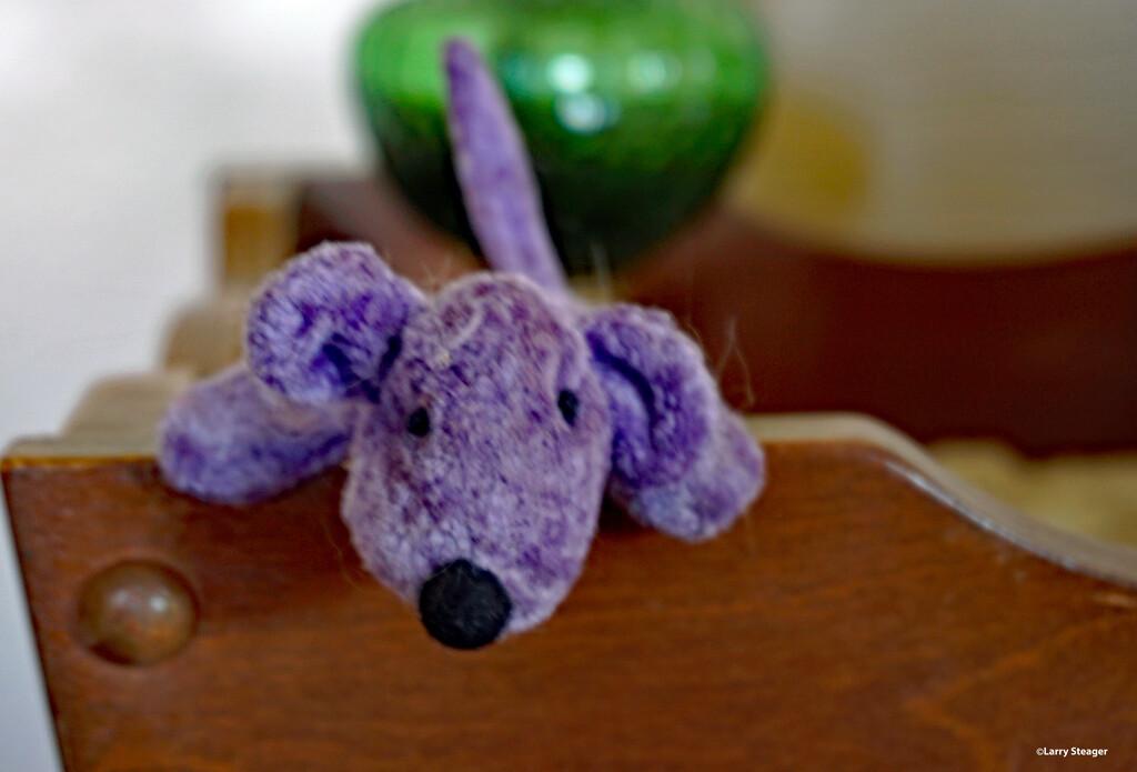 Little purple dog by larrysphotos