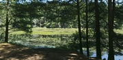 6th Sep 2021 - The Beaver Pond