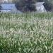 Dew in the Pasture