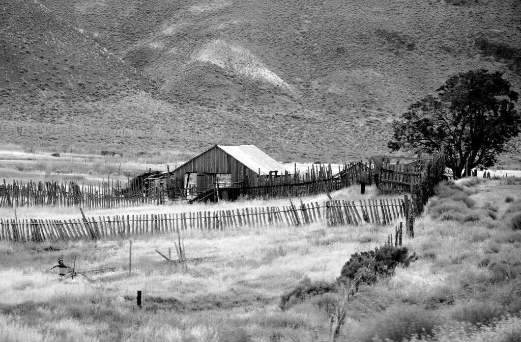 Old Homestead in the West by stownsend