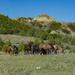 Wild Horses by cwbill