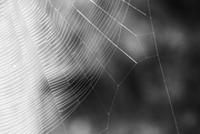 9th Sep 2021 - Spider's Web