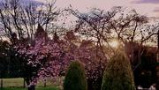 9th Sep 2021 - Blossom