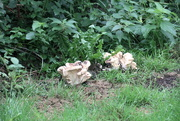 9th Sep 2021 - Fungus Time