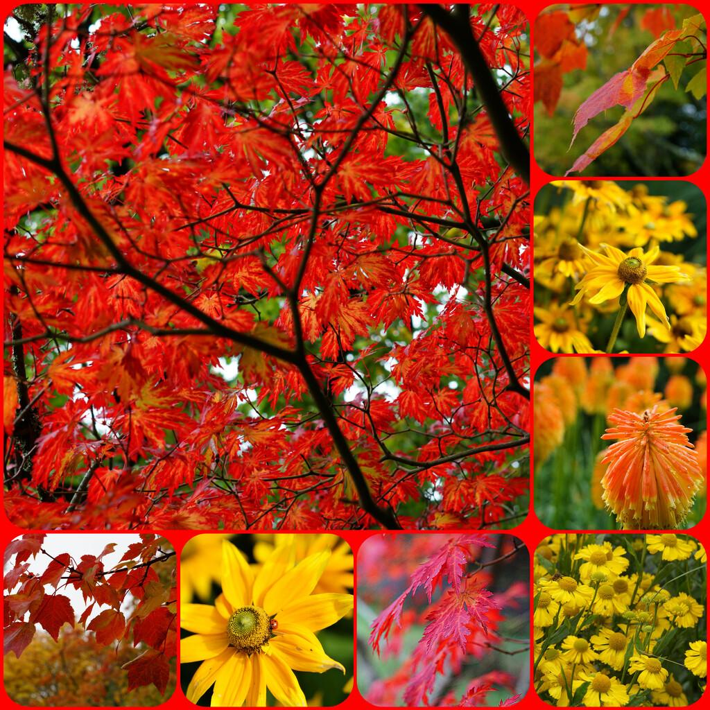 a collage of autumn colours by quietpurplehaze