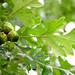 from tiny acorns grow mighty oaks