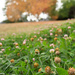 A patch of clover
