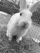 10th Sep 2021 - The curious bunny