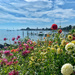 Festival of dahlias in Morges.