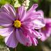 Another Wild Flower