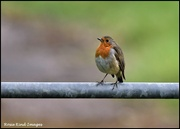 12th Sep 2021 - Sitting on the fence