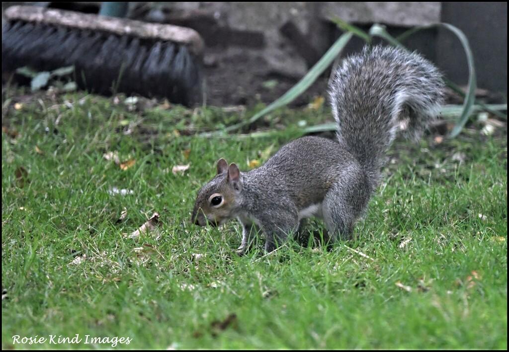 Burying nuts by rosiekind