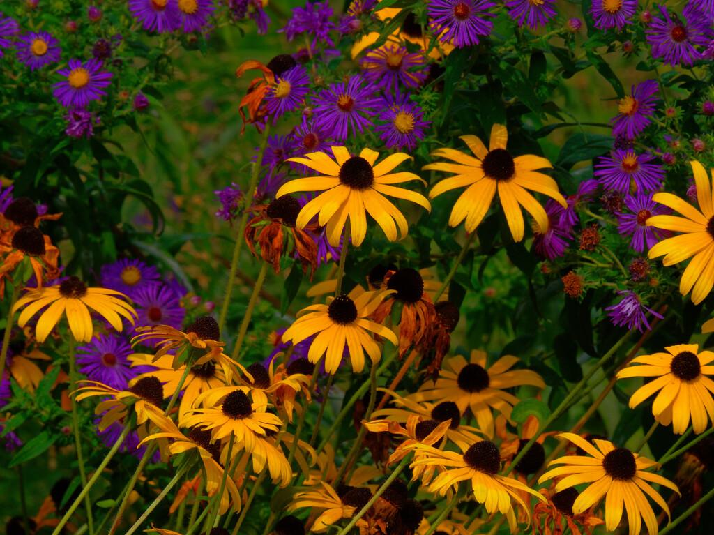 wildflower mix by rminer