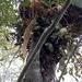 Possum nesting