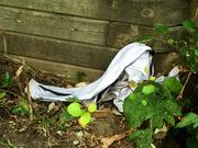 12th Sep 2021 - anyone lost a pair of pants?
