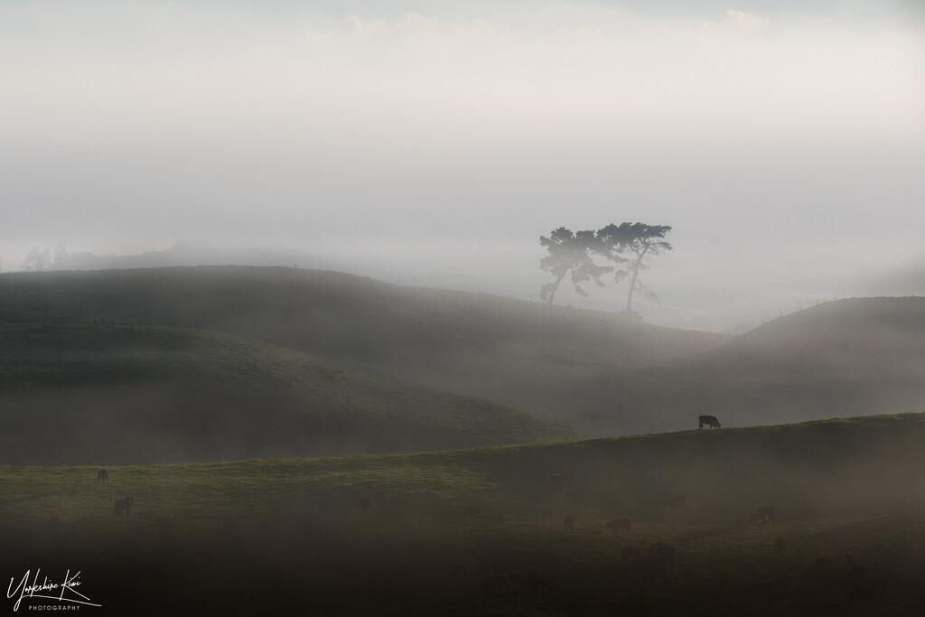 Waikato Mist by yorkshirekiwi