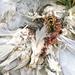 When a wasp kills a dove