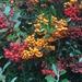 A burst of Autumnal colour