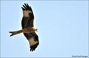 13th Sep 2021 - Fly Mr Kite